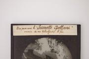 1904 Chamonix aux jumelles Bellieni