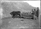 1898 11 Chine T'Ai Yuen Fou, Hou Tu Ko, houille sortie du bœuf rouleur