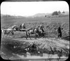 1899 02 Chine retour du cercueil à mules au pays natal