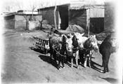1899 01 Chine voiture à fourage à 3 mules (photo Feydel)