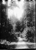 1899 07 Canada Parc à Vancouver