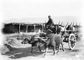 1897 09 02 Géorgie  Route avant Mtakhet charrette à boeufs relais de poste