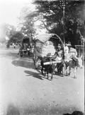 1898 07 20 Sri Lanka Colombo voiture à bœufs