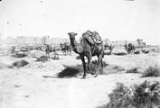 1897 09 18 Turkménistan Merv chameau devant les murs de  Bairam Ali